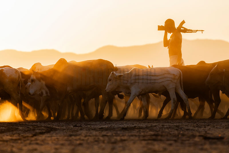 Herder Bringing Cattle to Water