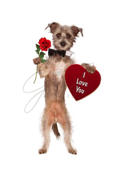 Dog Holding Rose and I Love You Heart