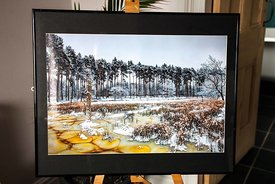 The Frozen Black Lake, Delamere Forest