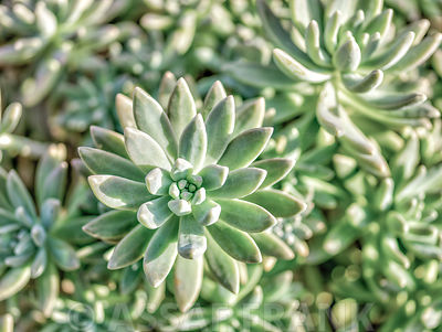 Succulents photos