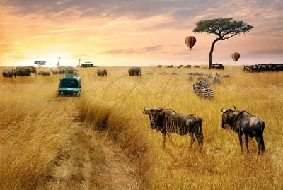 Dreamy African Wildlife Safari Scene