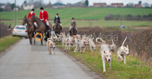 The Cottesmore foxhounds