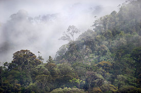 Montane Rainforest around Mt Hagen in Western Highlands of Papua New Guinea