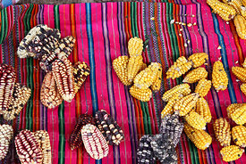 Maize (Zea mays) on textile in Chinchero market, near Cusco, Peru