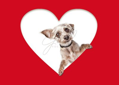 Cute Dog Looking Out of Cutout Heart