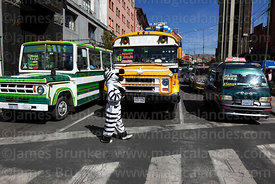 A zebra controls traffic at pedestrian crossing, La Paz, Bolivia