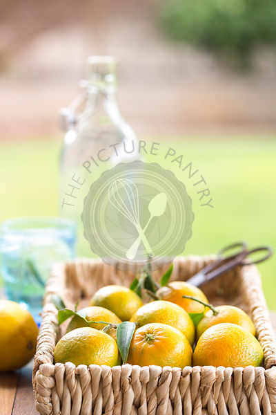 garden scene of clementines in basket with water glasses