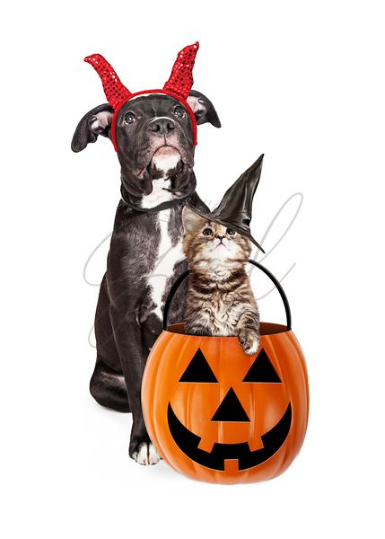 Puppy With Kitten in Halloween Pumpkin