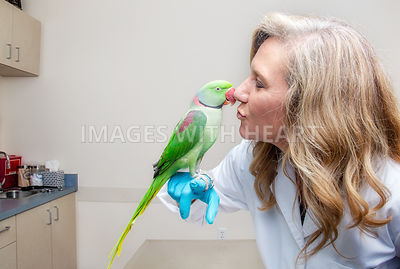 Veterinarian Kissing Bird in Exam Room