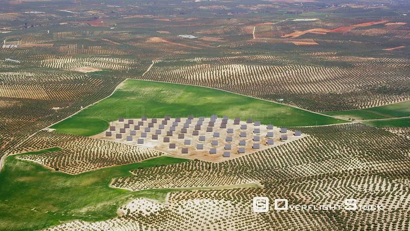Aerial View of Photovoltaic Plant Surrounded by Olive Plantations, Spain