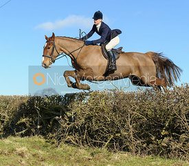 Annabel Bealby jumping a hedge near Knossington Spinney - The Cottesmore at Furze Hill.