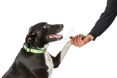 Closeup Man Shaking Hands With Dog