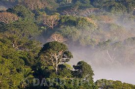 Mist shrouded lowland rainforest at dawn Soberiana NP Panama