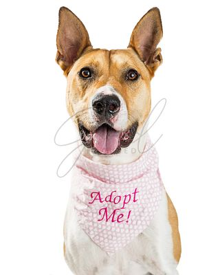 Happy Rescue Dog Wearing Adopt Me Bandana