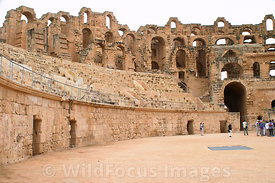 View from the arena floor looking south at the amphitheatre of Thysdrus, El Jem, Tunsia; Landscape