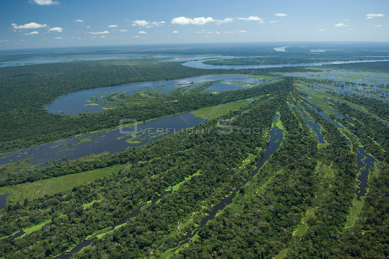 "Aerial view of Amazon ""várzea"" flooded Rainforest of Mamoré River, during the great flood of 2008, at the border of Brazil (Rondônia State) with Bolivia (Beni Department)."