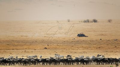Wildebeest Migration Safari in Kenya