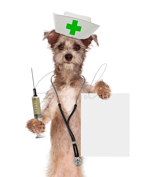 Dog Nurse With Shot and Sign