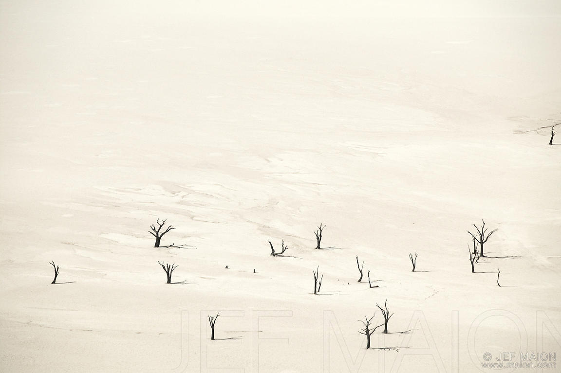 Dead trees on dry pan