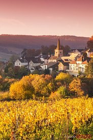 Vineyards, Pernand-Vergelesses, Cote d'Or, Burgundy, France