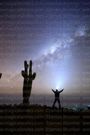Tourist wearing headtorch standing next to Echinopsis atacamensis (pasacana subspecies) cactus looking at Milky Way, Incahuasi Island, Salar de Uyuni, Bolivia