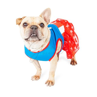Funny Female French Bulldog Super Hero
