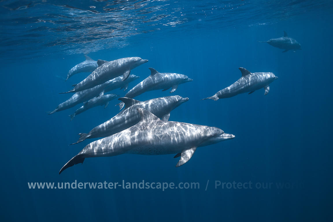 Dolphin photographer - Dolphins in Mayotte island