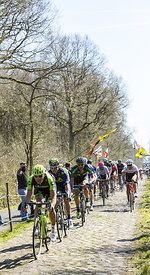 The Peloton in The Forest of Arenberg- Paris Roubaix 2015