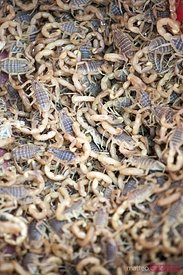 Live scorpions at Kashgar bazaar, China
