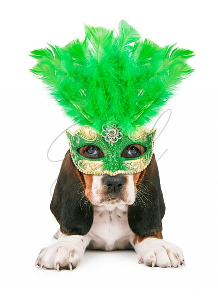 Puppy Wearing Mardi Gras Mask