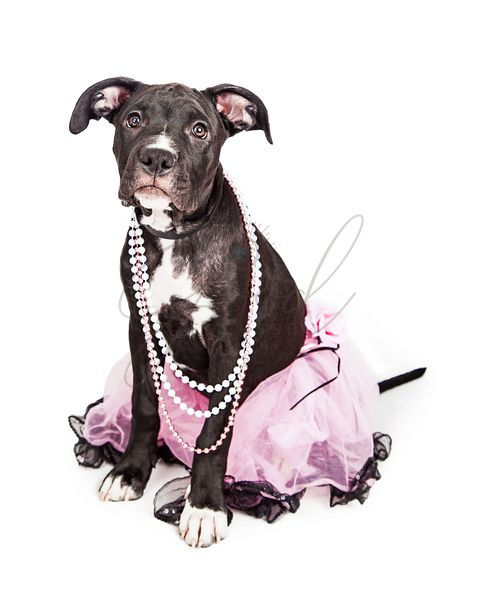 Cute Puppy Wearing Pink Tutu