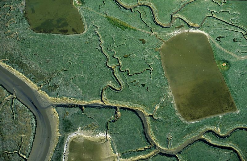 Aerial view of marshes at low tide with a hunting hut, Bay of Somme, Picardie, France.