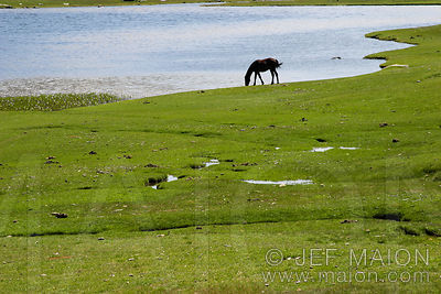 Horse by a lake
