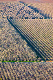 Walnut Orchards from the Air #2