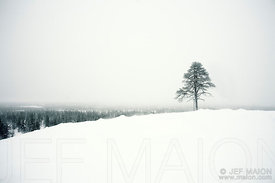 Lonely tree above winter forest