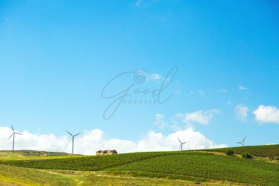 Rolling Hillside With Vineyard and Turbines in Sicily