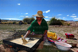 A woman heats quinoa grains mixed with pokera (to help separate the shell from the grain), Potosi Department, Bolivia