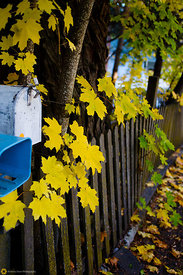 Fall colors on the Street, Nevada City #1