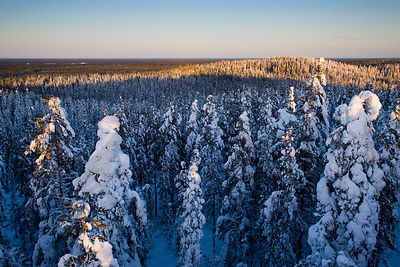 Snowy Forest on the of the Pookivaara Hill