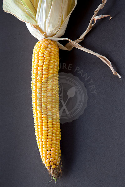 a single sweetcorn cob against a dark plain background