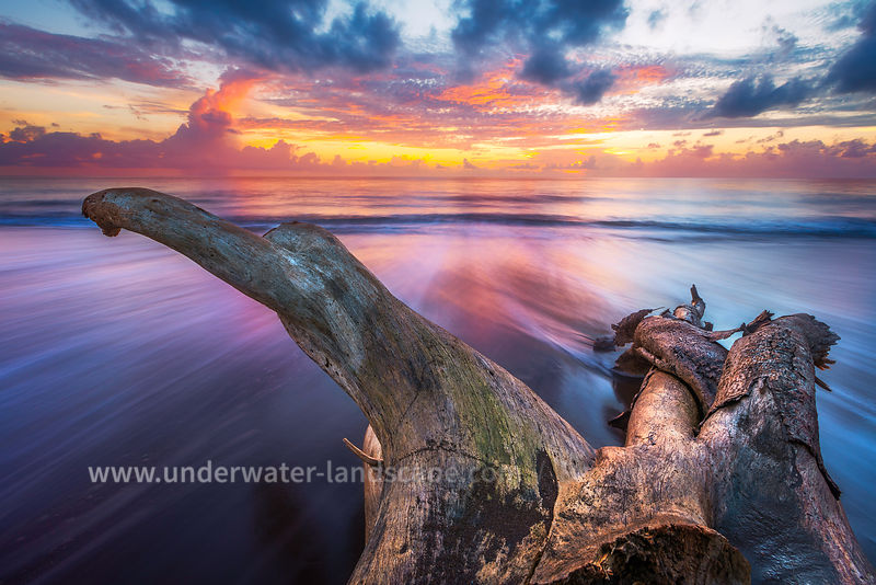 Sunset on Mayotte - Tree on the beach