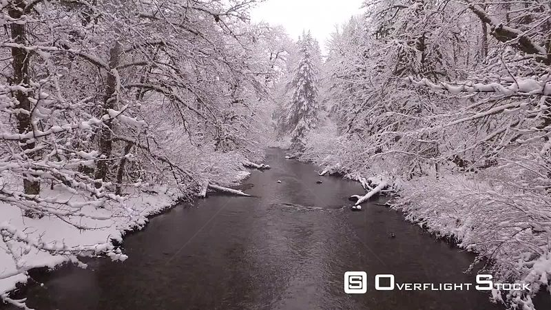 Creek flowing through snow covered trees while snow is falling. Mt. Hood Oregon