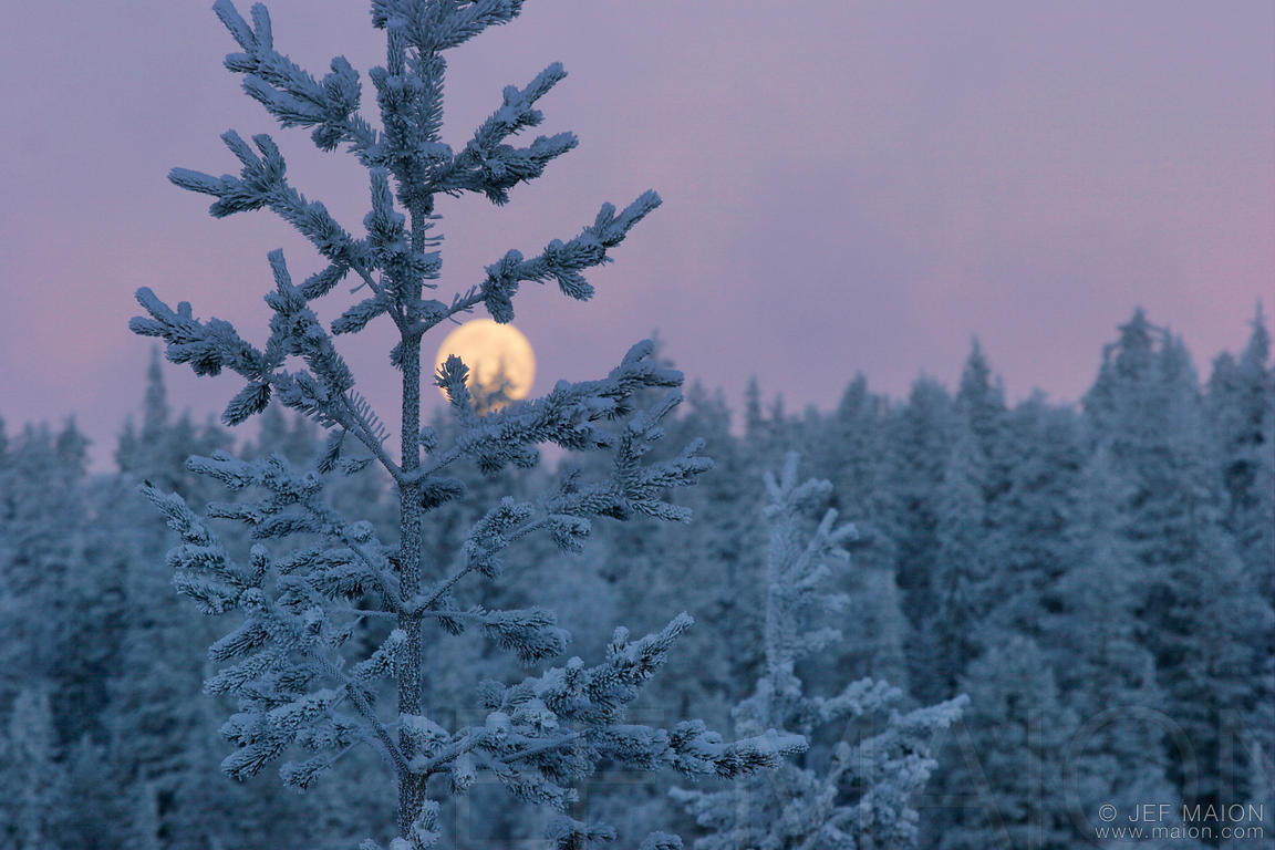 Full moon on the forest