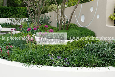 Jardin contemporain, Jardin design. Massif surélevé : Allium hollandicum 'Purple Sensation', Scilla peruviana, Peruvian scilla. Mur. Designer : Robert Myers. Chelsea FS, Angleterre