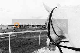 Horse eye view - The Quorn at Garthorpe 21st April 2013.