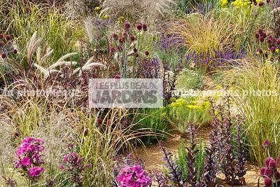La phototh que les plus beaux jardins euphorbe le for Jardin synonyme