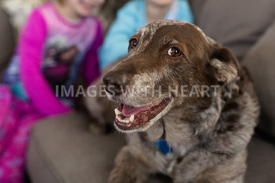 Happy dog on couch with partial view of children behind her