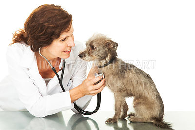 Female Veterinarian With Small Dog On Table