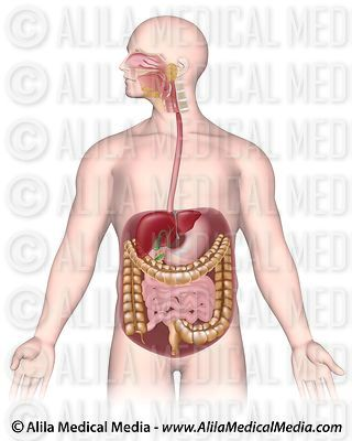 Gastroenterology & Digestive Diseases Images & Videos images