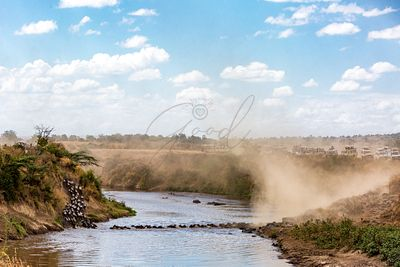 Safari Tourist Vehicles Viewing Wildebeest Crossing